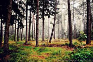 magic forest No.11 by naturetimescape