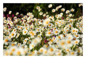 springtime Nr.7 by naturetimescape