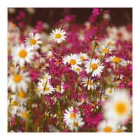 springtime Nr.10 by naturetimescape