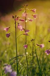 spring fever No.6 by naturetimescape