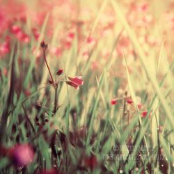 good life by naturetimescape