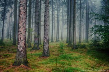 magic forest No.18 by naturetimescape