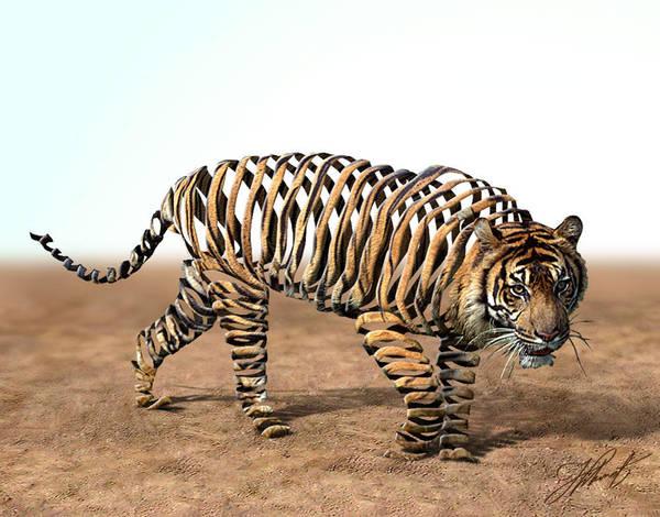 Tiger by heakmeat