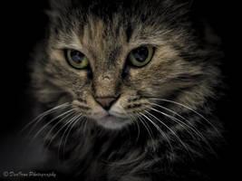 Hard Stare.... by DeoIron