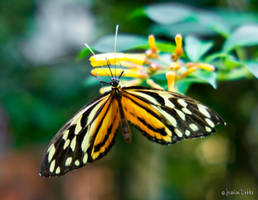 Butterfly 9 by JessicaDobbs