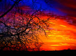 Fire Beyond The Tree by JessicaDobbs