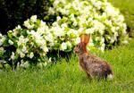 Zoo Rabbit by JessicaDobbs