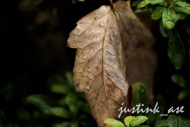 Rain Leaf by justink-ase
