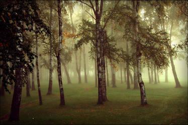misty wood by dincha