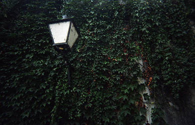 the lamp and the ivy. by luisbelo