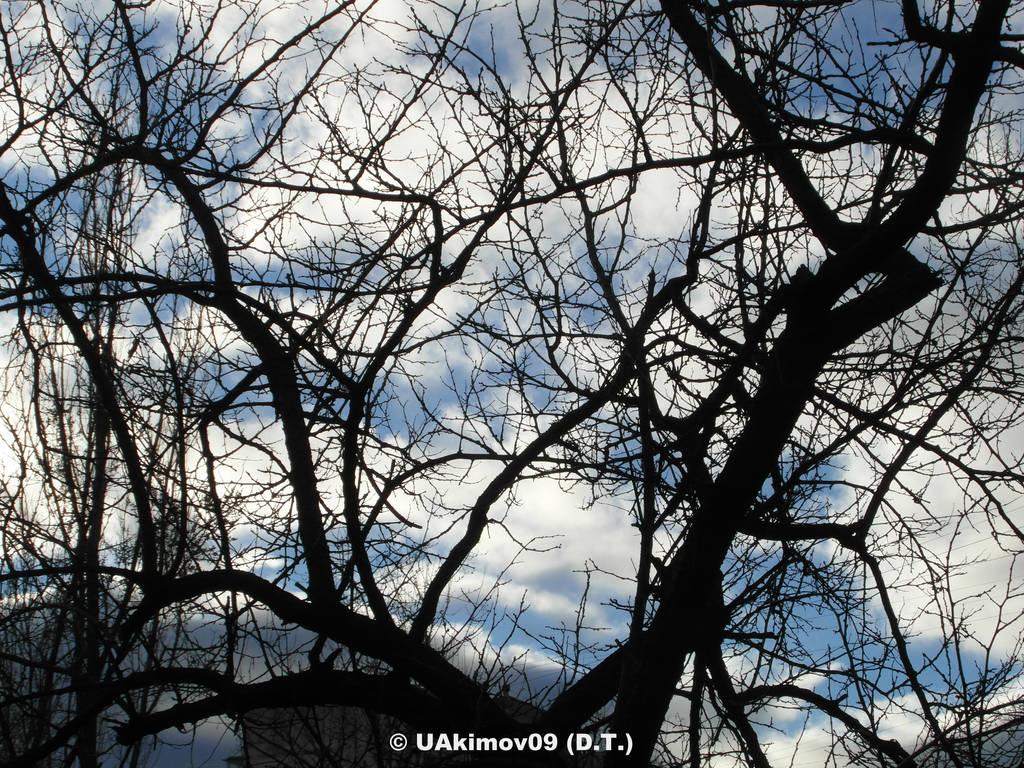 (Ukraine, Kiev) My name is Nature 15 01m 12 #20 by UAkimov09