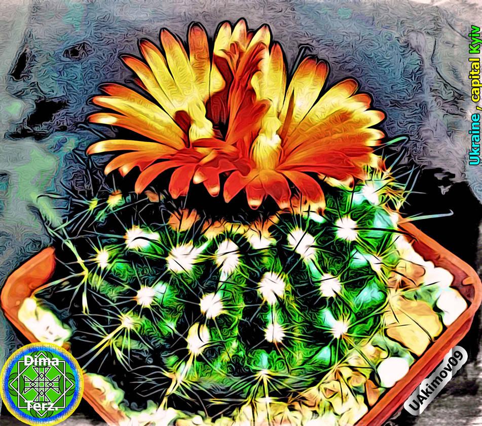 Cactus Parodia by UAkimov09