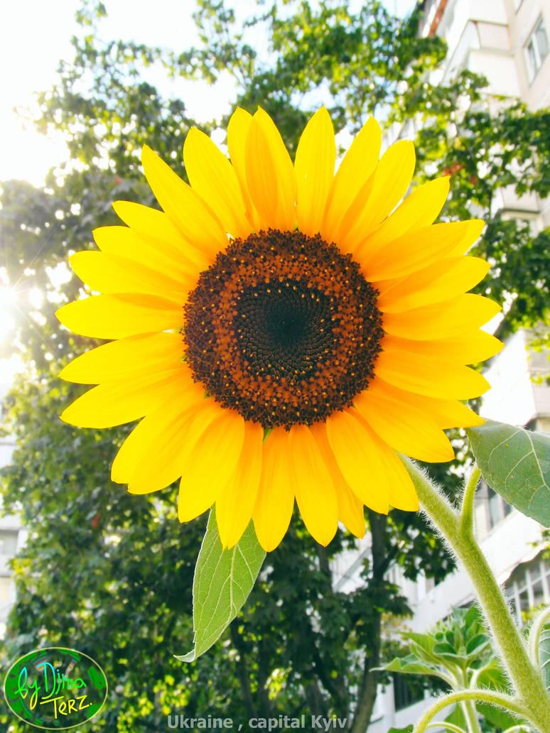 Enjoyable Sun is Here ! :) by UAkimov09