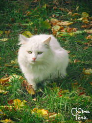White Cat :) by UAkimov09