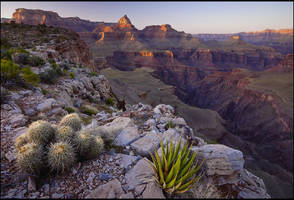 Mesa Plantlife by Rhavethstine