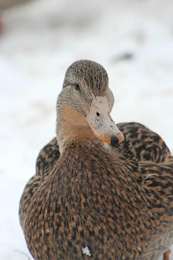 Happy duck by DarkRose-87