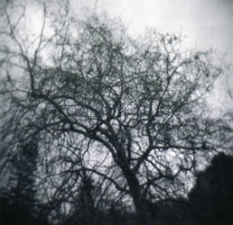 Sorrow by ArianaDragonapollo