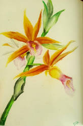 Orchidee by Tokessa