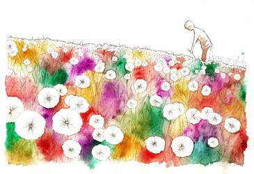 dandelions by kamaratih