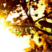 Those Autumn Aftertoons by TwiggyTeeluck