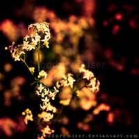 Nightfall by TwiggyTeeluck
