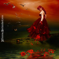 Poppies by Alimera