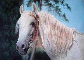 next horse by GOTYCKI