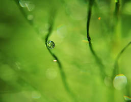 Little green world by Sandy515
