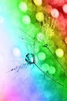 Winter Rainbow by Sandy515