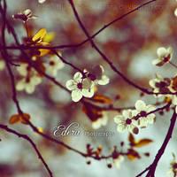 Le printemps III by phoenixgraphixstudio
