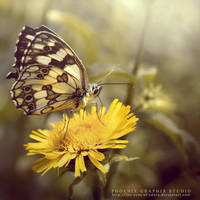 . . . butterfly kiss by phoenixgraphixstudio