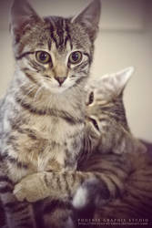 . . . ninja cats . . . by phoenixgraphixstudio