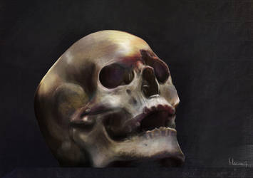 Skull study by Marikaiti