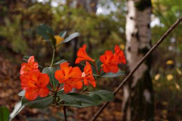 Red Flowers by destroyerofducks