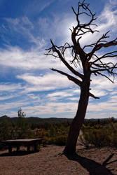 Tree Silhouette by destroyerofducks