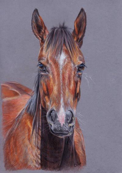 Horse  by Erikor