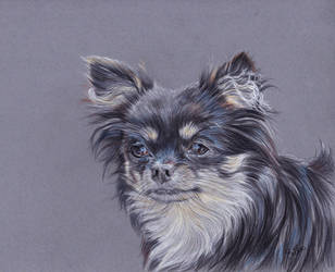 Chihuahua portrait by Erikor