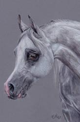 Arabic horse by Erikor