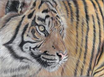 Tiger  by Erikor
