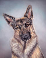 German shepherd by Erikor