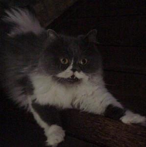 IgorNip's Profile Picture