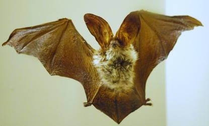 Bat Stock 2 by shortcakesnail-Stock