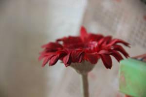 In Red by Kroshka-Kapron