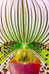 Flower shoot 7-18 - 5 by misdirekted