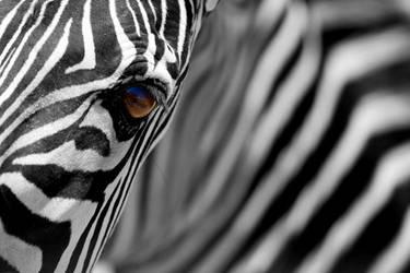Stripes by misdirekted