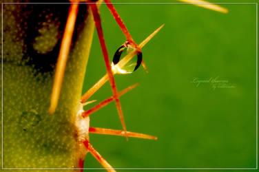 .:Liquid thorns:. by aliveruka