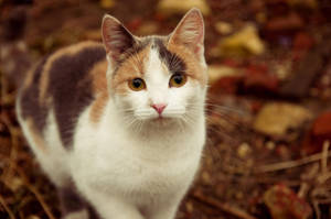 Three-colored cat by Anna-Belash