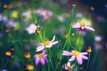 Tiny Dreams by Photoloaded