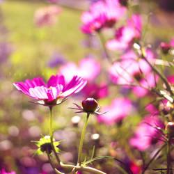 Dear, Beloved by Photoloaded