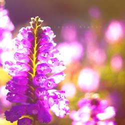 Singular Dream by Photoloaded